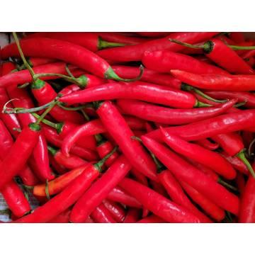 Chilli Merah (Big)